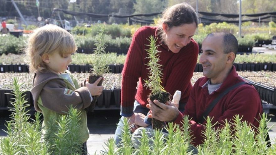 Click photo to download. Caption: Two-year-old Hagai, and his parents Ofra and Eyal, choose plants in a nursery in Eshtaol, Israel, in celebration of Tu B'Shevat on Jan. 19, 2011. Credit: Nati Shohat/Flash90.