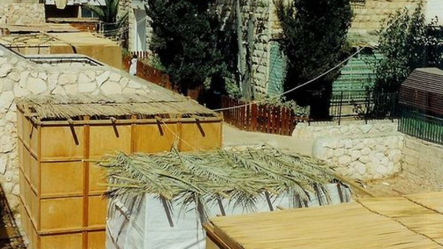 Click photo to download. Caption: Sukkah roofs in Jerusalem. Credit: Yoninah via Wikimedia Commons.