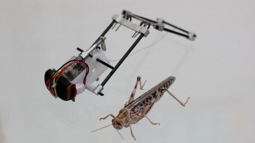 Click photo to download. Caption: Tel Aviv University's robotic locust. Credit: Courtesy American Friends of Tel Aviv University.