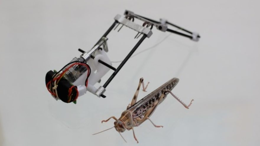 Click photo to download. Caption: Tel Aviv University's robotic locust. Credit: Courtesy American Friends of Tel Aviv University.