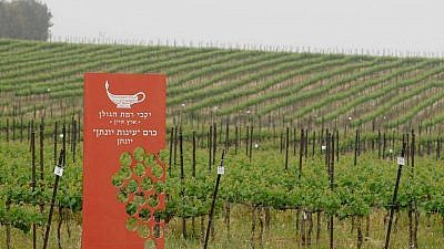 A view of the vineyard at Yarden Golan Heights Winery. Credit: Facebook