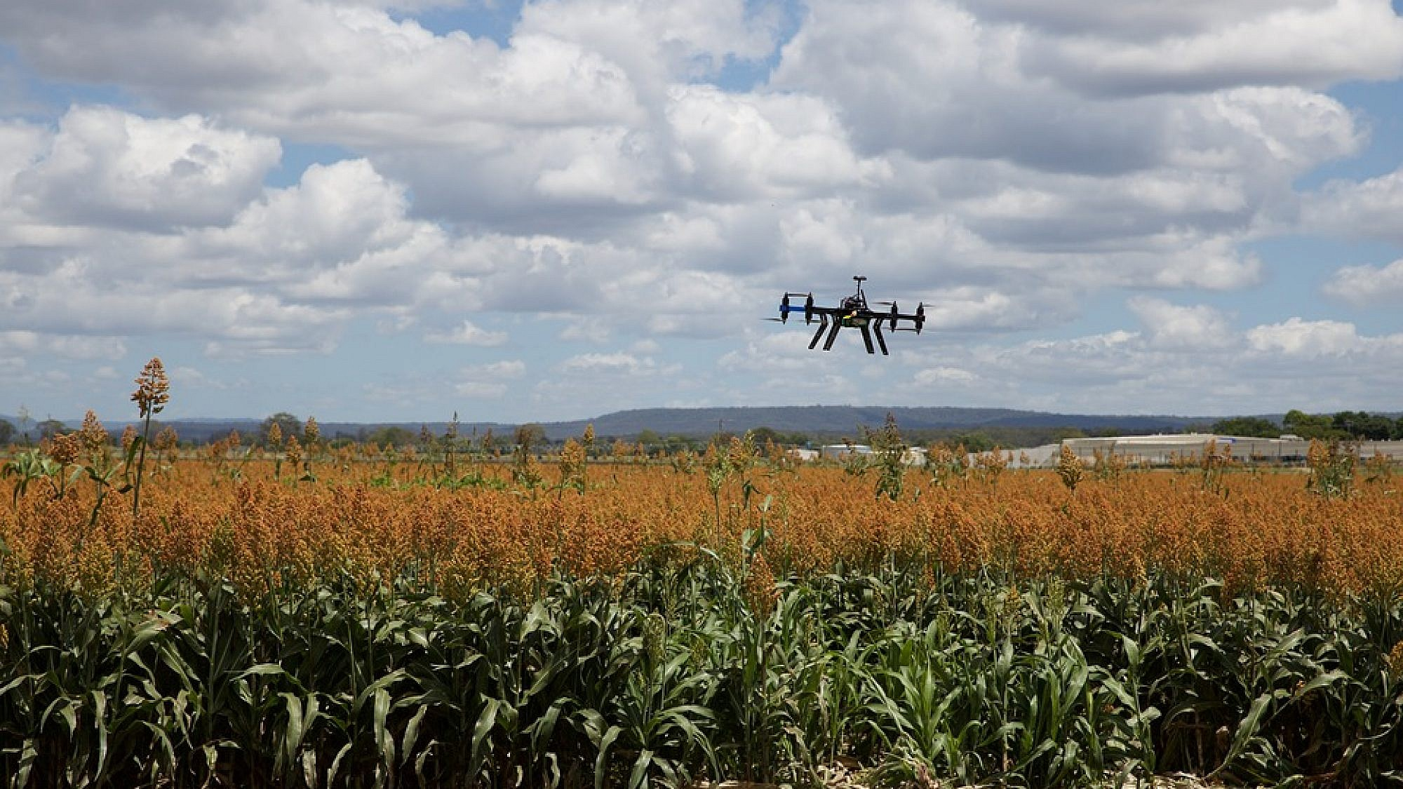 """Illustrative: A drone flying through corn fields highlighting """"agTech"""" or agricultural technology. Credit: Pixabay Creative Commons."""