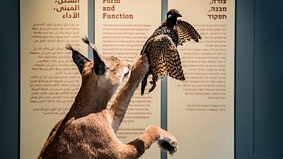 """From the """"Form and Function"""" exhibit, which presents creatures from Israel and the world, and demonstrates how their body structures and capabilities are adapted to their various environments and living conditions. Credit: Itay Benit."""