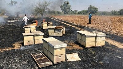 Honey farmers inspecting bee hives that had caught fire from incendiary attacks from Hamas in the Gaza Strip in its campaign of arson terrorism, August 2018. Credit: Alon Sigron.