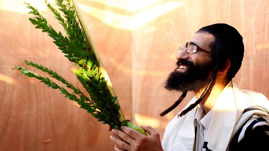 An observant Jewish man examines a palm branch, known as a lulav, for imperfections in the Mea Shearim neighborhood of Jerusalem on Sept. 21, 2010, a few days before the Jewish holiday of Sukkot. Photo by Abir Sultan/Flash 90.
