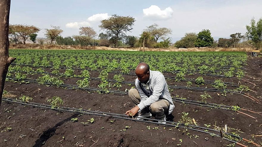 A local farmer tends to his Tikkun Olam Ventures (TOV)-supported site that has been equipped with the Israeli drip-irrigation system. Credit: JDC.