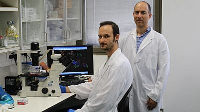 Hebrew University PhD student Maxim Mogilevsky and Prof. Rotem Karni in the Institute for Medical Research-Israel Canada lab. Photo by Polina Denichenko courtesy of Hebrew University