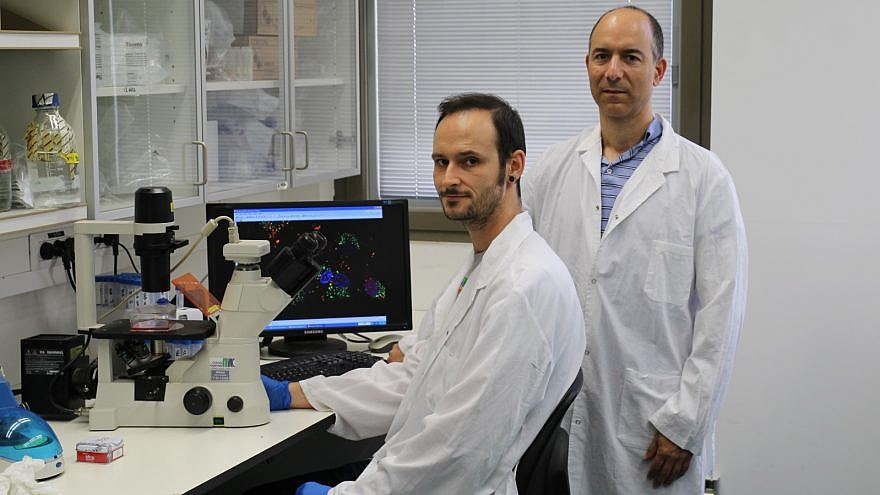 Hebrew University Ph.D. student Maxim Mogilevsky (left) and Professor Rotem Karni in the Institute for Medical Research-Israel Canada lab. Photo by Polina Denichenko courtesy of Hebrew University.