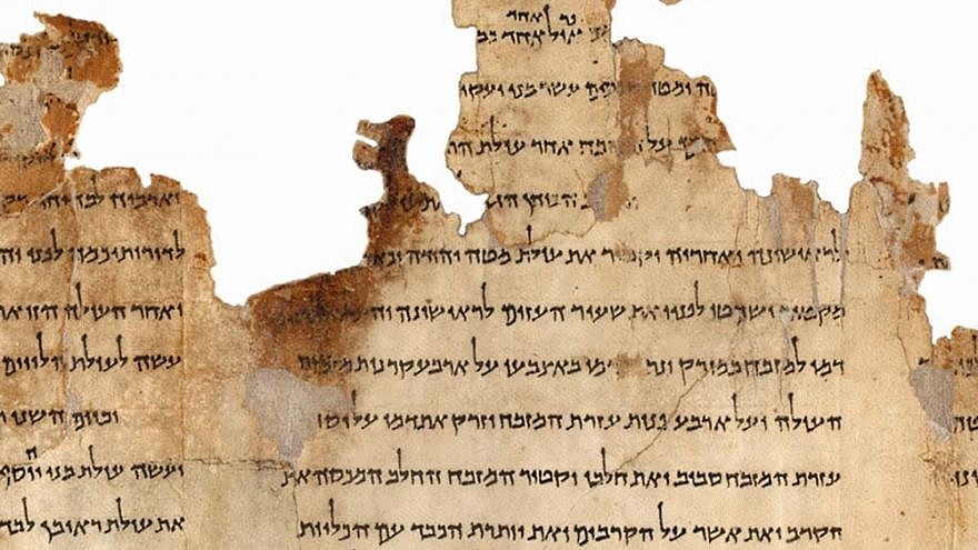 Portion of the Temple Scroll, labeled 11Q19, one of the longest of the Dead Sea Scrolls dating back to the second-century C.E. Credit: Israel Museum, Jerusalem.