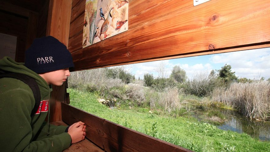 A child visits the Jerusalem Bird Observatory, which houses the Israel national bird-ringing center. Together with the active ringing station, it serves as a tool for conservation studies and research that monitor bird populations. Credit: Photo by Yossi Zamir/Flash90.