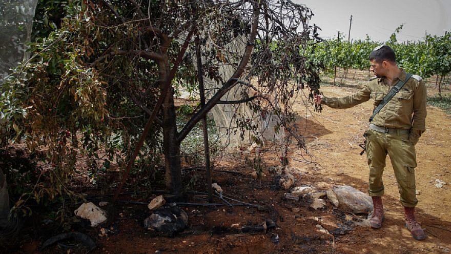 An Israeli soldier stands next to a cherry orchard that was set on fire and vandalized overnight in Kfar Etzion on May 23, 2018. Photo by Gershon Elinson/Flash90.