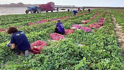 Busy helping farmers in southern Israel. Credit: HaShomer HaChadash.