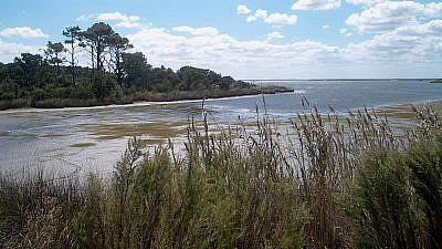 False Cape State Park, Virginia Beach, Va. Credit: Wikimedia Commons.