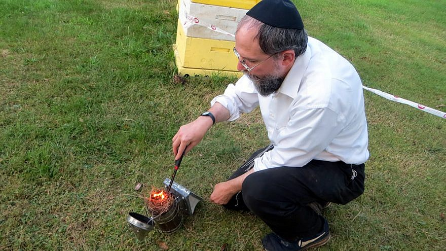 Rabbi Avraham Laber, co-director of Chabad-Lubavitch of Southern Rensselaer County in New York, uses smoke to calm honey bees before opening a hive. Photo by Carin M. Smilk.