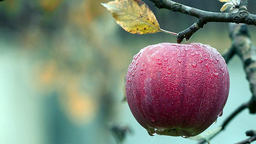 Apples in autumn. Credit: Pixabay.