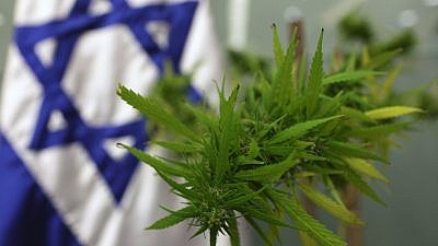 Israel has become the leader in cannabis research and innovation, using data to show the efficacy of cannabinoids (the active components of cannabis) in treating a range of health conditions, such as epilepsy and autism. Photo by Kobi Gideon/Flash90.