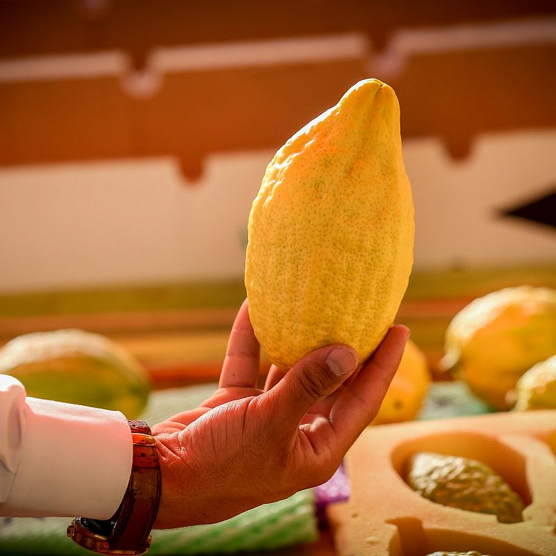 "The ""etrog"" (citron), one of the ""Four Species"" or ""Four Kinds,"" on sale at a market in the northern Israeli city of Tzfat, ahead of the holiday of Sukkot, Oct. 10, 2019. Photo by David Cohen/Flash90."