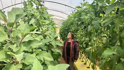 Ziva Gilad, a researcher in agricultural research-and-development in the Jordan Valley, at a date farm in the Jordan Valley. Photo by Eliana Rudee.