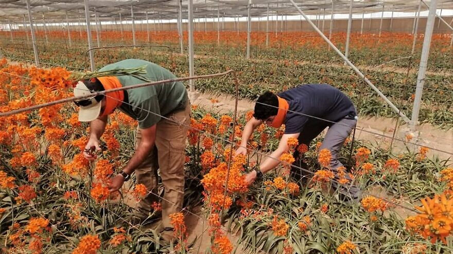 Volunteers from Jewish National Fund-USA affiliate's HaShomer HaChadash picked flowers for some of Israel's 192,000 living Holocaust survivors timed to Yom Hashoah, April 20-21, 2020. Courtesy: JNF.