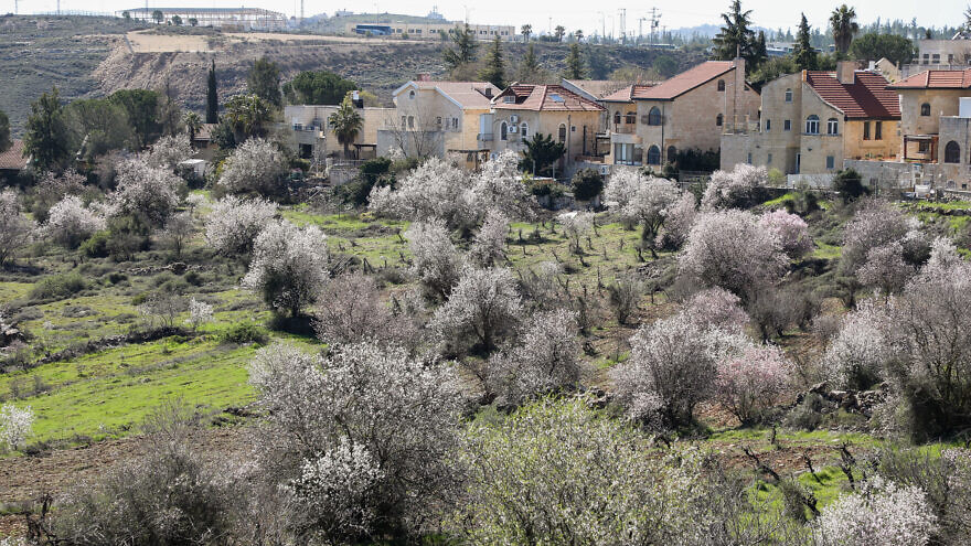Blossoming almond trees in Efrat in Gush Etzion on March 4, 2020. Photo by Gershon Elinson/Flash90.