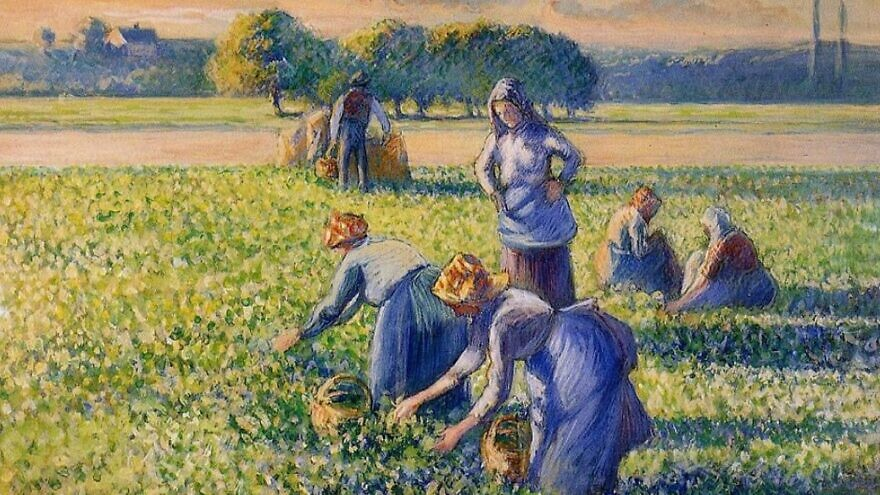 """The 1887 painting """"La Cueillette des Pois"""" (""""Picking Peas"""") by Camille Pissarro. Credit: Wikimedia Commons."""