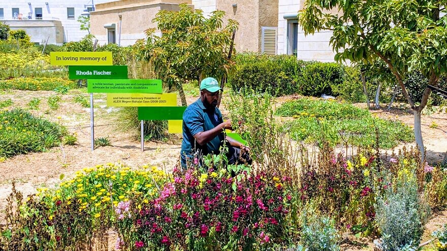 A member of the ALEH Negev gardening team tends to the Rhoda Fischer Memorial Garden ahead of the Virtual Memorial Ceremony and Dedication at ALEH Negev-Nahalat Eran on July 5, 2020.
