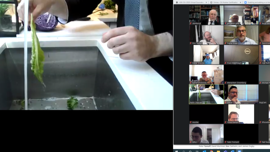 Participants from 23 countries joined the virtual event which focused on bedikas tolaim (checking for insect infestation) with real time closeup video of bugs on vegetables, as well as other topics