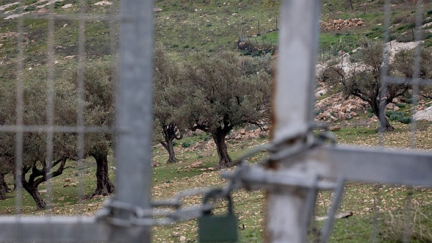 A view of the separation wall and fields of olive trees next to the eastern Jerusalem village of Abu Dis, Feb. 2, 2020. Photo by Olivier Fitoussi/Flash90.