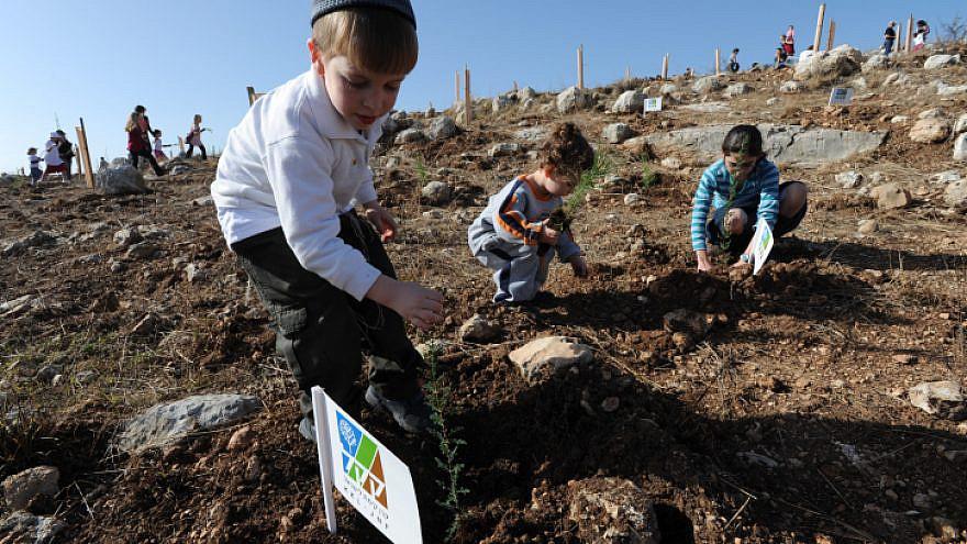 Israeli children plant trees for the holiday of Tu B'Shevat. Photo by Gili Yaari/Flash90.