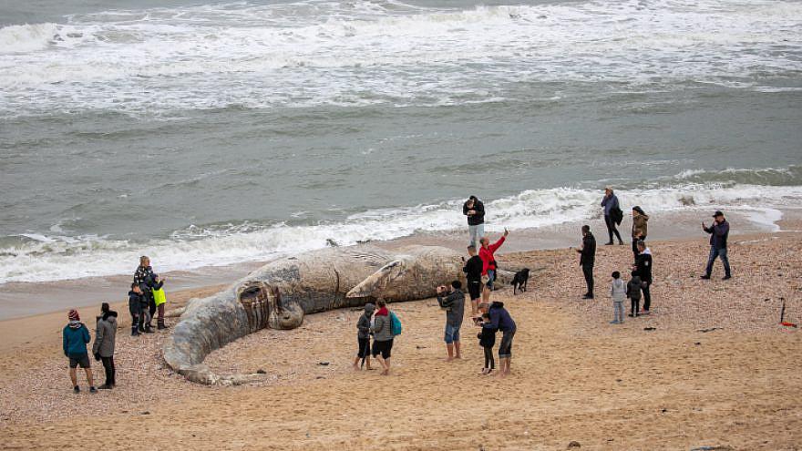 Israelis stand around a 17-meter-long fin whale washed ashore on the Nitzanim beach near Ashkelon, on Feb. 19, 2021. Photo by Yossi Aloni/Flash90.