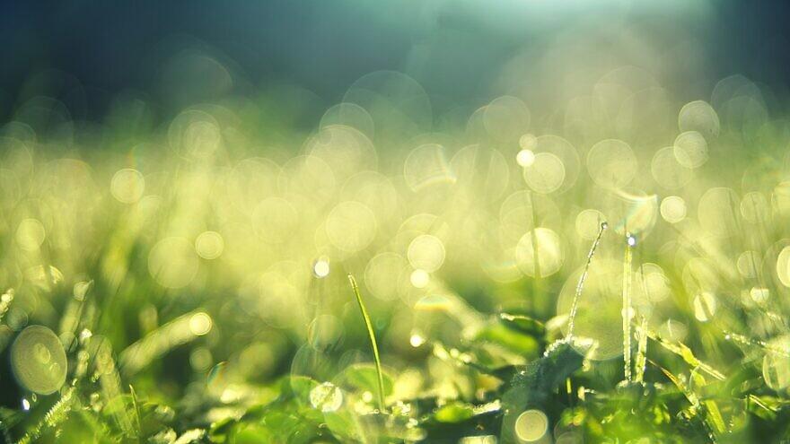Summer morning dew. Credit: Pixabay.