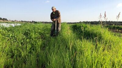 Ben Rosenberg will let his organic farm rest during the Jewish sabbatical year. Credit: Ben's Farm.
